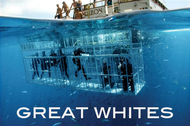 Great Whites Horizon